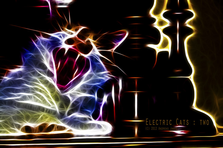 "Serie ""Electric Cats"""